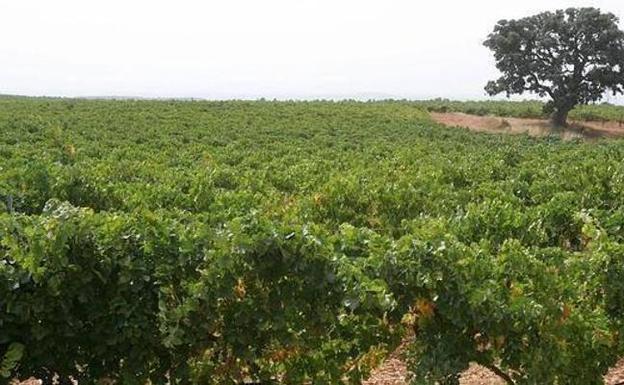 Economia dieciocho bodegas de utiel y requena se unen en - Bodegas de vino en valencia ...