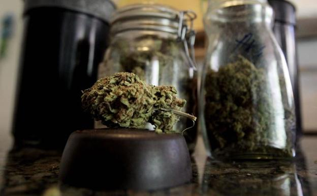 Plantas de marihuana y un cogollo en un domicilio particular./Desiree Martin (Afp)
