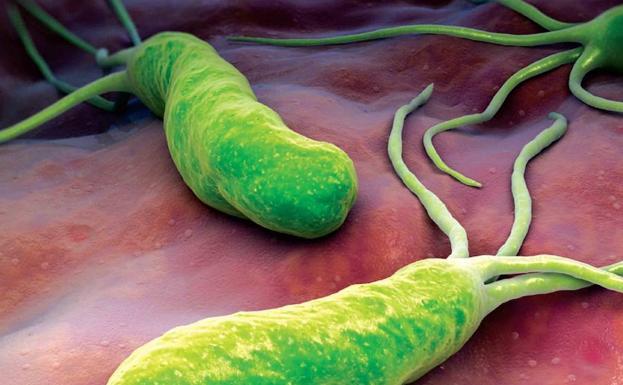 Helicobacter Pylori La Peligrosa Bacteria Estomacal Que Tiene El 54 De La Población Las Provincias