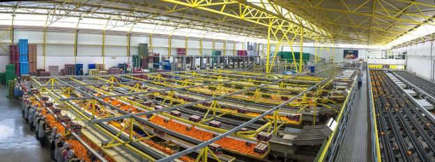 Trabajadores en las instalaciones de Bollo International Fruits. / LP