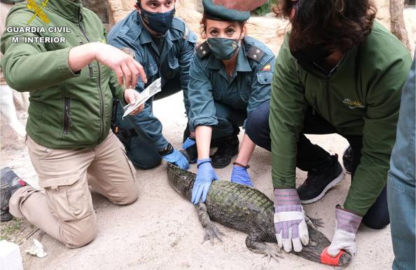 Los agentes, con el caimán capturado/GUARDIA CIVIL